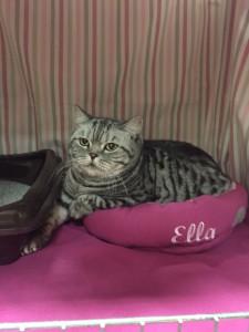 PR&IC Ella af Clipper