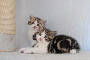 Pecorino och Havarti, 6 veckor gamla